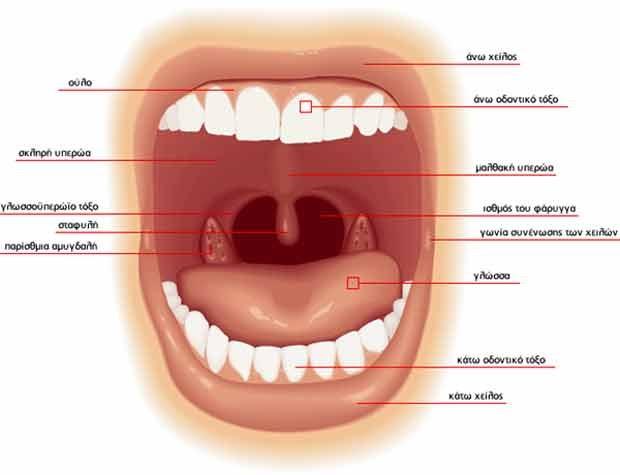 Οδοντίατροι στο Μενίδι Αχαρνές , οδοντίατρος Δυτικής Αττικης , οδοντιατρος Ανω Λιόσα