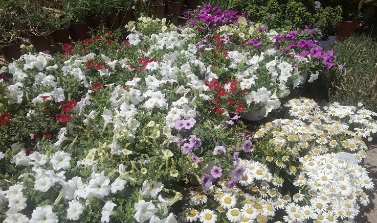 Φυτά, φυτοφάρμακα, χώματα, λιπάσματα, Γλυφάδα, Νότια Προάστια, Ελληνικό, Βούλα