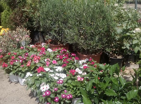 Φυτώρια, φυτά εξωτερικού χώρου Γλυφάδα, Ελληνικό, Βούλα, Νότια προάστια