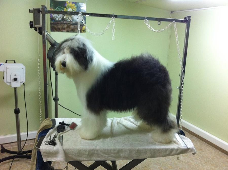 Κουρέματα σκύλων Αγία Παρασκευή, grooming σκύλων Αγία Παρασκευή