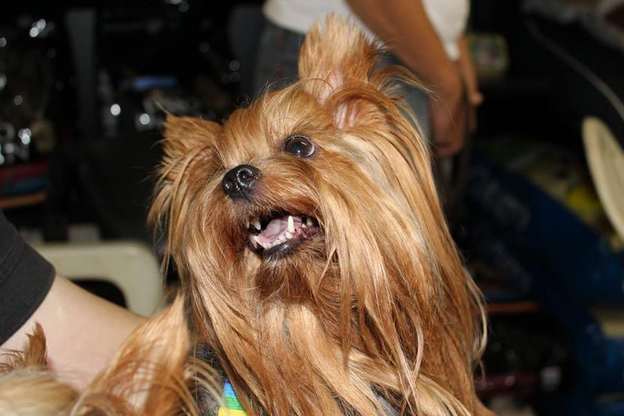 Κομμωτήριο σκύλων Αγία Παρασκευή, μπάνιο σκύλων Αγία Παρασκευή
