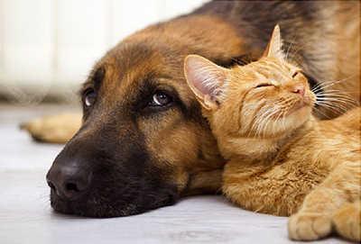 Pet shop Άνω Λιόσια, Κτηνιατρικά Άνω Λιόσια, Τροφή για γάτα Άνω Λιόσια