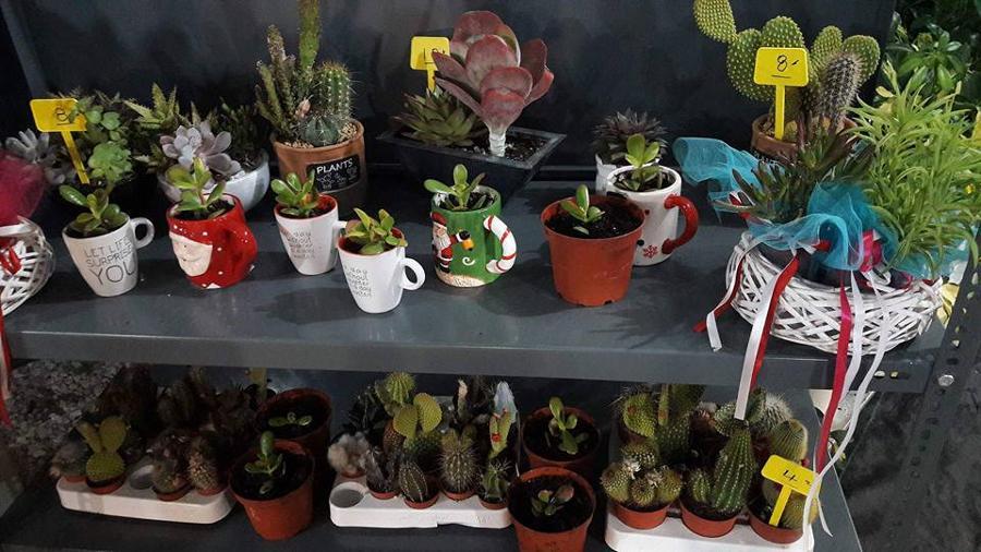 Άνθη Φυτά Παιανία, Φυτώρια Παιανία, Φυτώρια Γλυκά Νερά, Γλάστρες Παιανία, Φυτά εσωτερικού χώρου Παιανία, Φυτόχωμα Παιανία, Δενδρύλλια Παιανία