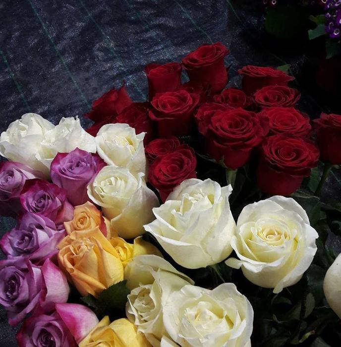 Άνθη Φυτά Παιανία, Φυτώρια Παιανία, Φυτώρια Γλυκά Νερά, Καλλωπιστικά φυτά Παιανία, Λιπάσματα Παιανία, Γκαζόν Παιανία