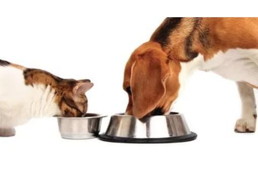 Γατοτροφή Άνω Λιόσια, Τροφές για γάτα Άνω Λιόσια
