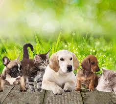Pet shop Άνω Λιόσια, Αξεσουάρ κατοικίδιων Άνω Λιόσια