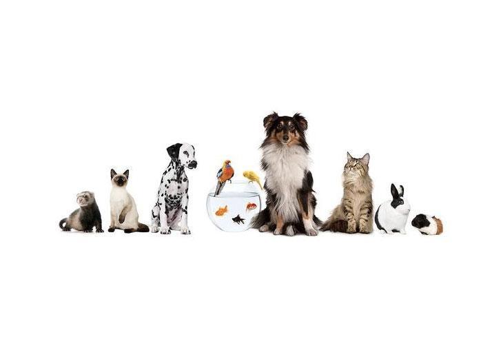 Αξεοσυάρ σκύλου Άνω Λιόσια, Αξεσουάρ γάτας Άνω Λιόσια