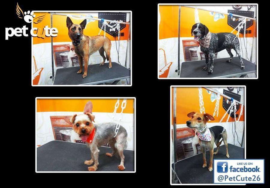 Καλλωπισμός ζώων Νίκαια, Κομμωτήρια σκύλων Νίκαια, pet grooming Νίκαια, Κούρεμα σκύλου Νίκαια