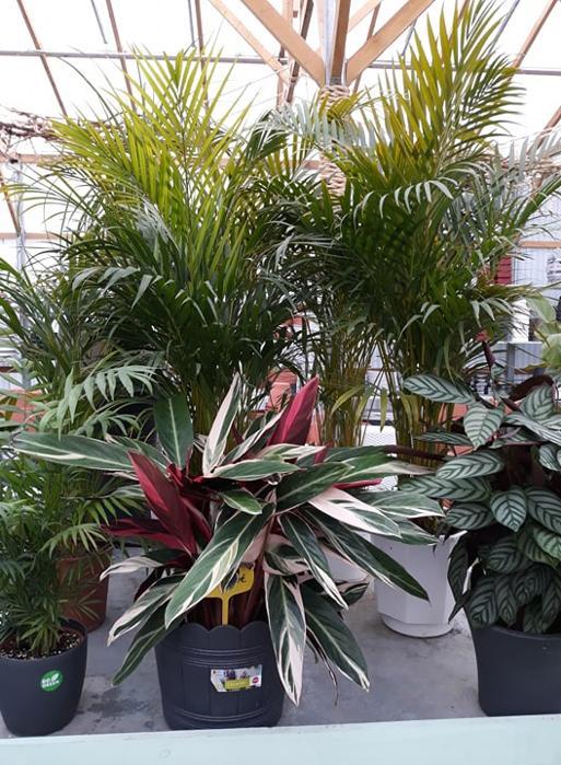 Ππατζανης φυτα απο ολο τον κοσμο χαλανδρι βορεια προαστια κηπους αυτοματο ποτισμα