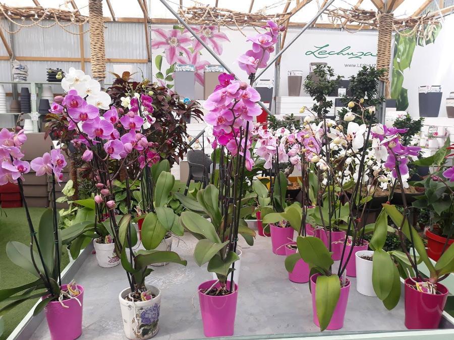 Φυτωριο Παπατζανης φυτα εσωτερικου και εξωτερικου χορου χαλανδρι βορεια προαστια